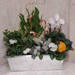 Coupe plantes L'Ile aux Fleurs